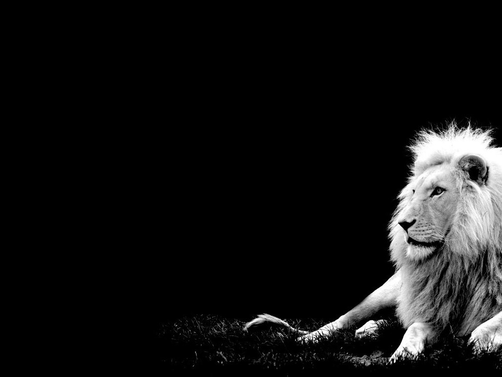 Black-Background-Lions-and-Tigers-Wallpaper